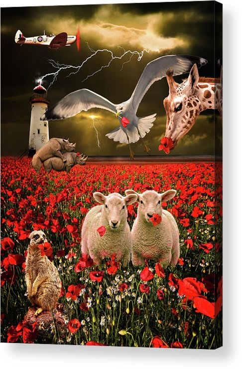 Sheep Acrylic Print featuring the photograph A Very Strange Dream by Meirion Matthias