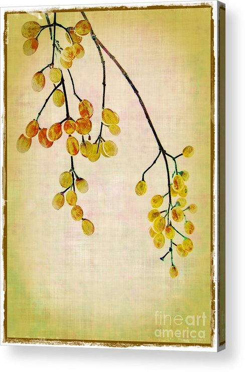 Yellow Acrylic Print featuring the photograph Yellow Berries by Judi Bagwell