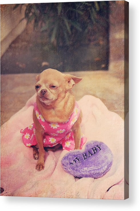 Dogs Acrylic Print featuring the photograph My Baby by Laurie Search