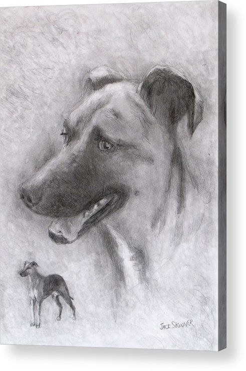 Dog Acrylic Print featuring the drawing Eliot by Jack Skinner