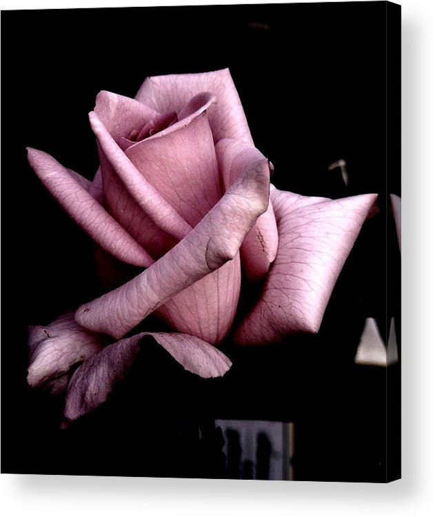 Rose Flower Acrylic Print featuring the photograph Mauve Flower by Mohammed Nasir