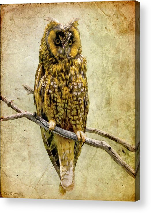 Owl Acrylic Print featuring the digital art Long Eared Owl by Ray Downing