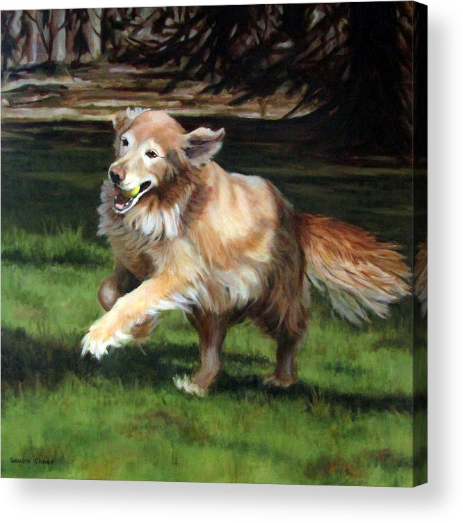 Dog Acrylic Print featuring the painting Golden Days by Sandra Chase