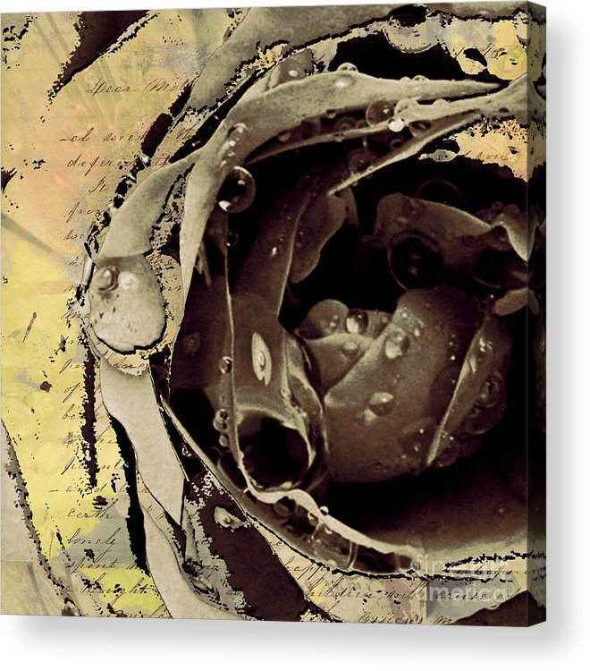 Acrylic Print featuring the mixed media Life Iv by Yanni Theodorou