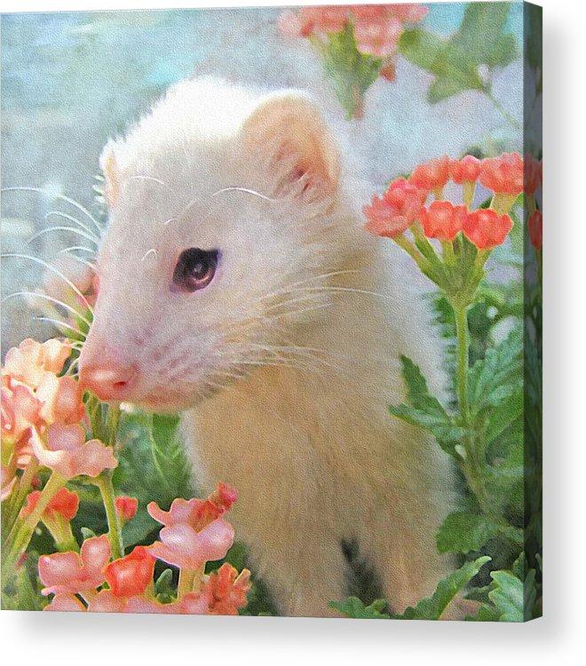 Ferret Acrylic Print featuring the digital art White Ferret by Jane Schnetlage
