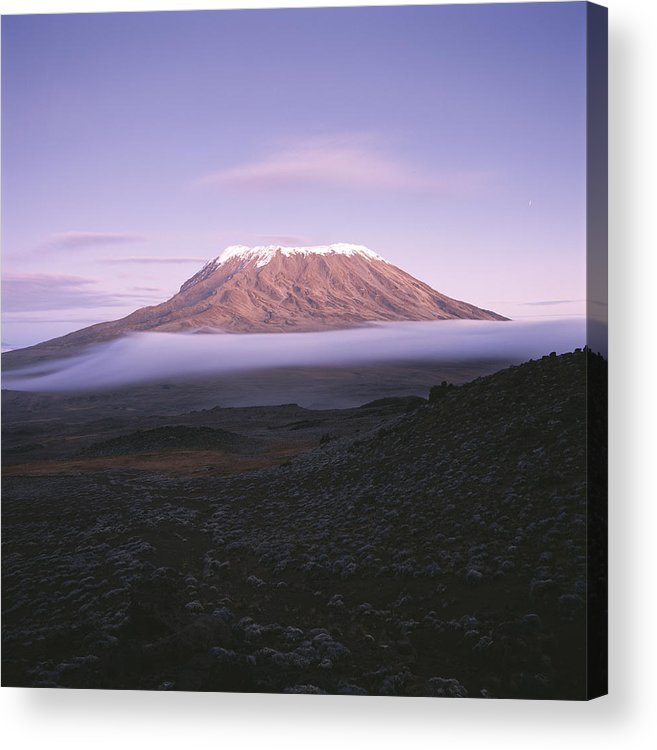 Africa Acrylic Print featuring the photograph A View Of Snow-capped Mount Kilimanjaro by David Pluth