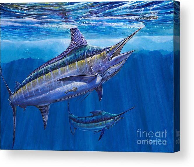 Blue Marlin Acrylic Print featuring the painting Blue Marlin Bite Off001 by Carey Chen