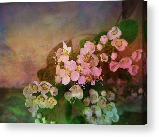 Spirea Acrylic Print featuring the photograph Bridal Memories by Shirley Sirois