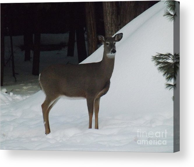 Wildlife Acrylic Print featuring the photograph Doe A Deer by Brenda Brown