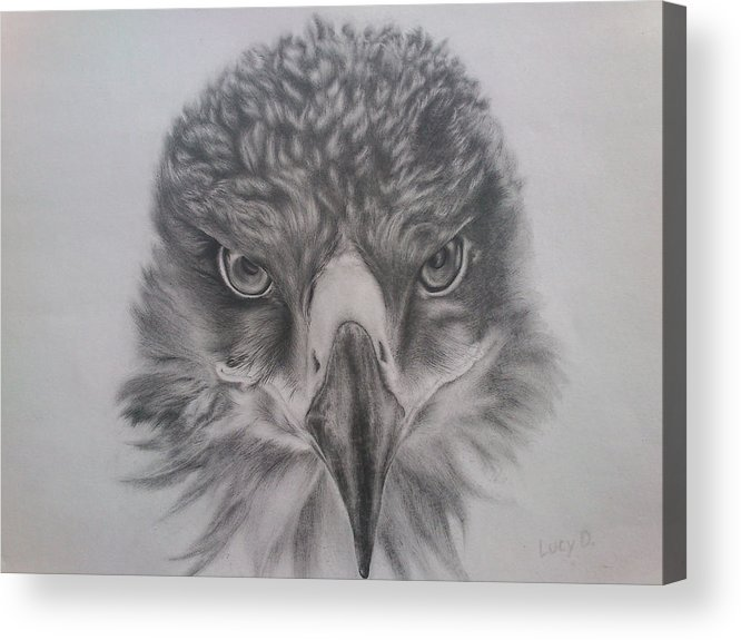 Eagle Acrylic Print featuring the drawing Eagle by Lucy D
