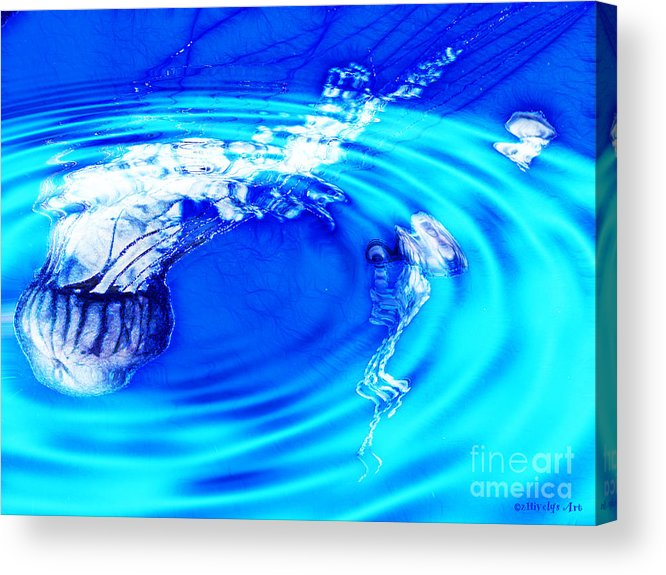 Jellyfish Pool Acrylic Print featuring the photograph Jellyfish Pool by Methune Hively