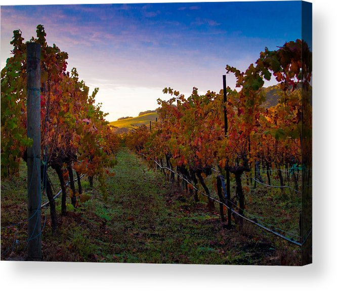 Nature Acrylic Print featuring the photograph Morning At The Vineyard by Bill Gallagher