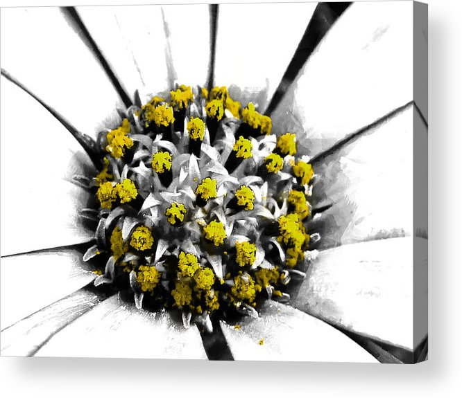 Selective Acrylic Print featuring the photograph Pollen by Steve Taylor