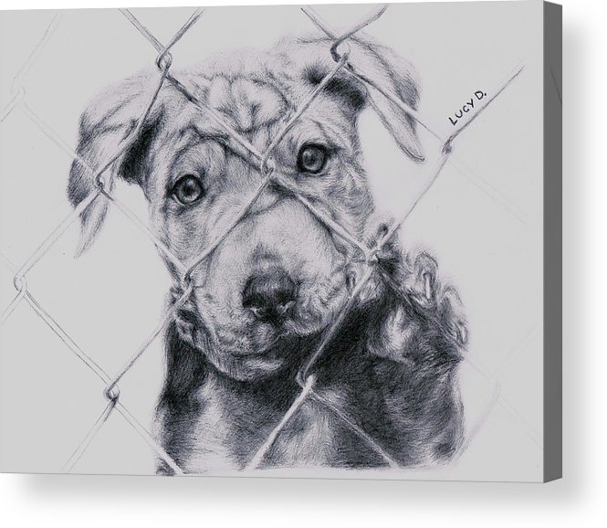 Animals Acrylic Print featuring the drawing Save Me by Lucy D