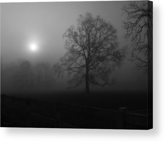 Landscape Acrylic Print featuring the photograph Winter Oak In Fog by Deborah Smith