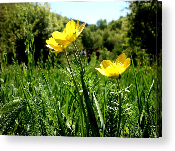 Flowers Acrylic Print featuring the photograph Yellows by Lucy D