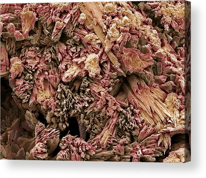 Calcium Sulphate Dihydrate Acrylic Print featuring the photograph Gypsum Crystals, Sem by Steve Gschmeissner