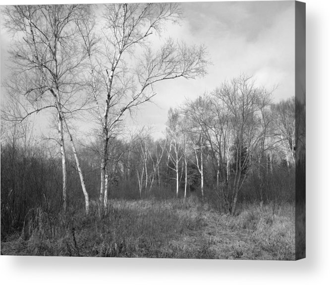 Forest Acrylic Print featuring the photograph Autumn Birches by Anna Villarreal Garbis