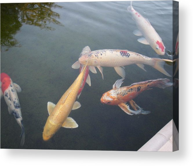 Fish Acrylic Print featuring the photograph Fish Swimming by Val Oconnor
