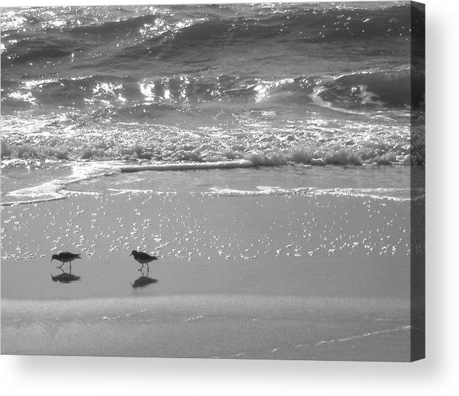 Beach Acrylic Print featuring the photograph Gulls Taking A Walk by Cindy Lee Longhini