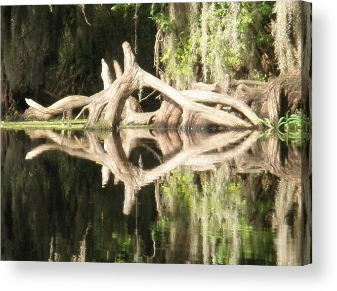 Florida Acrylic Print featuring the photograph Mirrorknot by Warren Clark