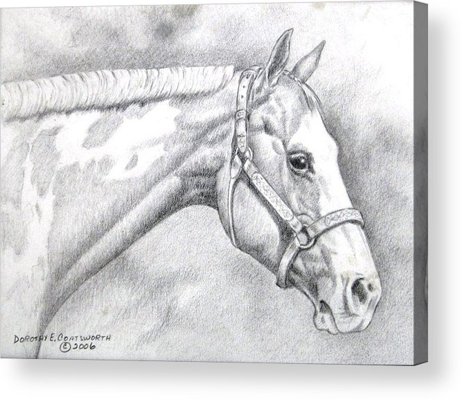 Acrylic Print featuring the drawing Paint Horse by Dorothy Coatsworth