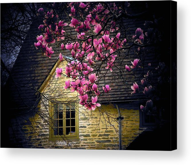 Flowers Acrylic Print featuring the photograph Dogwood By The Window by Joyce Kimble Smith