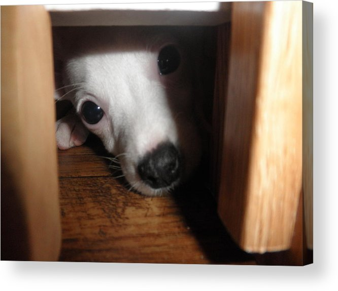 Puppy Acrylic Print featuring the photograph Peek A Boo by Camille Reichardt