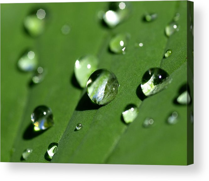 Dew Acrylic Print featuring the photograph Waterdrops by Melanie Viola