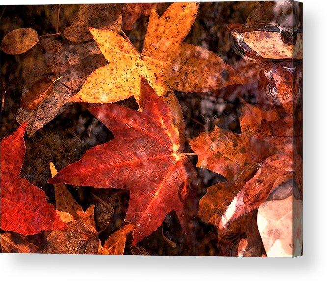Leaves Acrylic Print featuring the photograph With Love - Autumn Pond by Theresa Asher