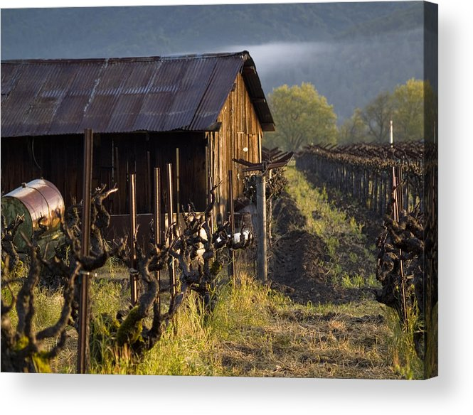Napa Acrylic Print featuring the photograph Napa Morning by Bill Gallagher