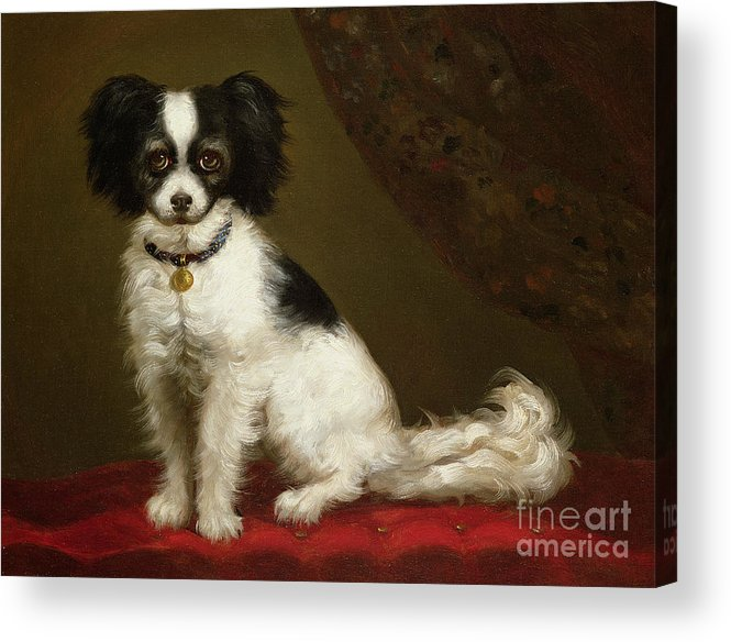 Portrait Of A Spaniel By Anonymous Acrylic Print featuring the painting Portrait Of A Spaniel by Anonymous