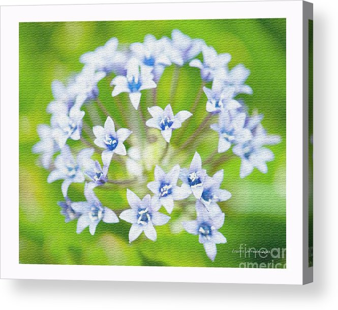 Agapantha Purple Flowers Acrylic Print featuring the photograph Agapantha Purple Flowers by Artist and Photographer Laura Wrede