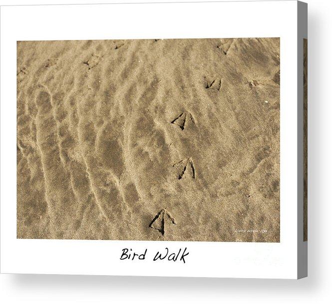 Bird Feet Acrylic Print featuring the photograph Bird Walk by Artist and Photographer Laura Wrede