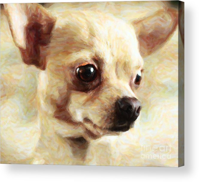 Animal Acrylic Print featuring the photograph Chihuahua Dog - Painterly by Wingsdomain Art and Photography