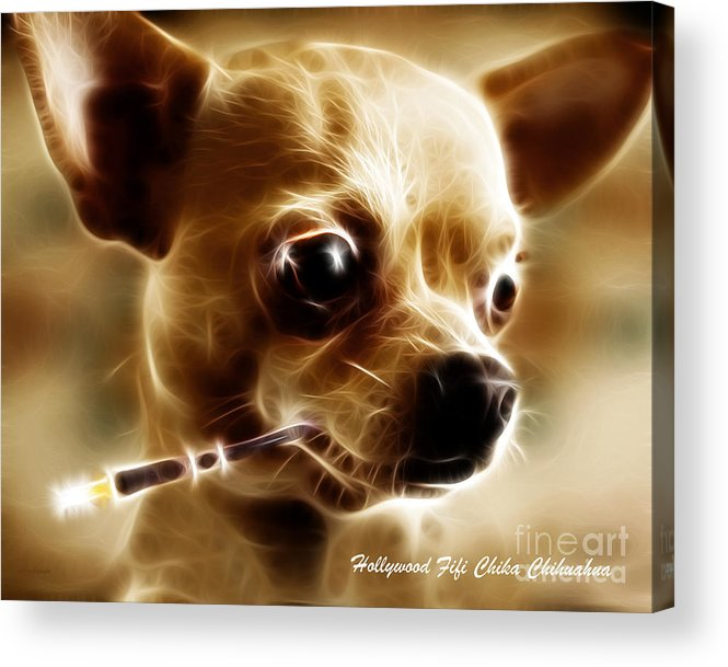 Animal Acrylic Print featuring the photograph Hollywood Fifi Chika Chihuahua - Electric Art - With Text by Wingsdomain Art and Photography