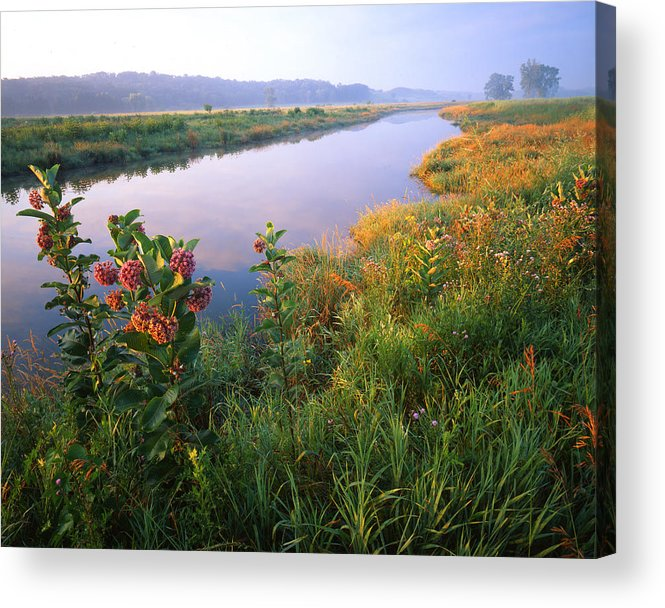 Sunset Acrylic Print featuring the photograph Milk Weed Morning by Ray Mathis