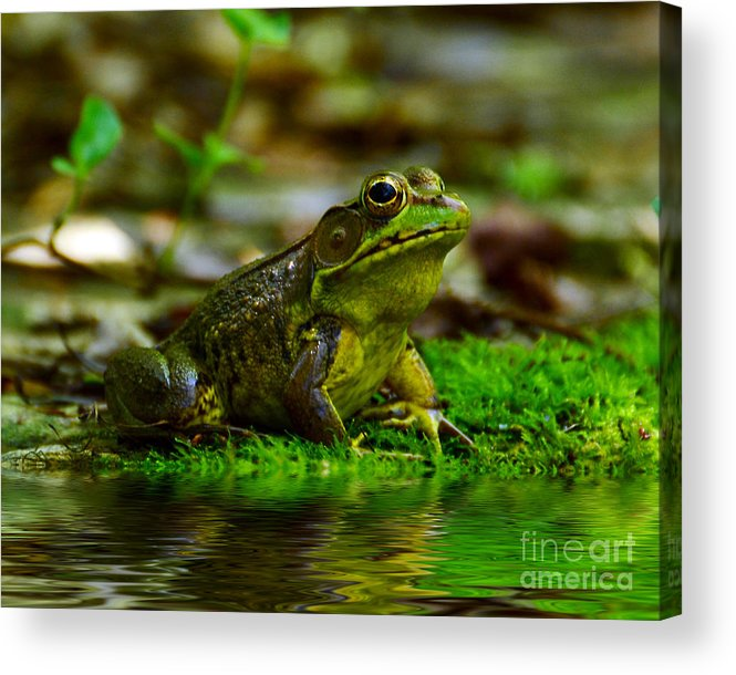 Frog Acrylic Print featuring the photograph Resting In The Shade by Kathy Baccari