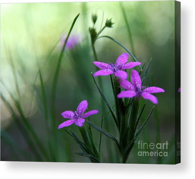 Purple Acrylic Print featuring the photograph Ultra Violet by Neal Eslinger