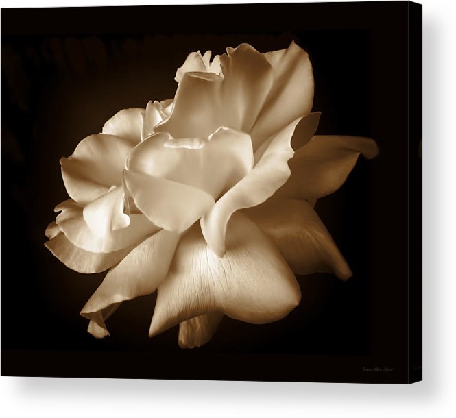 Rose Acrylic Print featuring the photograph Umber Rose Floral Petals by Jennie Marie Schell