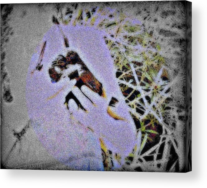 Crow Acrylic Print featuring the mixed media Helping The Crow by YoMamaBird Rhonda
