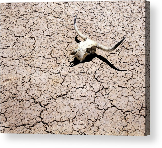 Desert Acrylic Print featuring the photograph Skull In Desert 2 by Kelley King