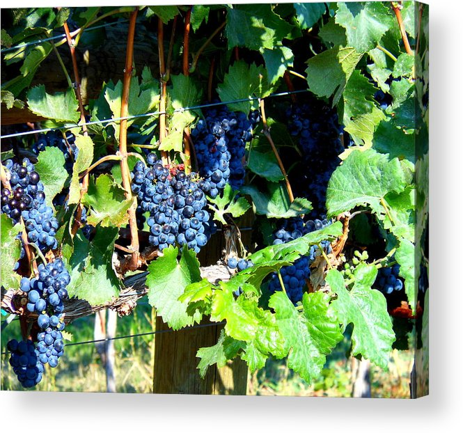 Grapes Acrylic Print featuring the photograph Before The Harvest by Kay Gilley