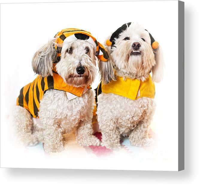 Dogs Acrylic Print featuring the photograph Cute Dogs In Halloween Costumes by Elena Elisseeva