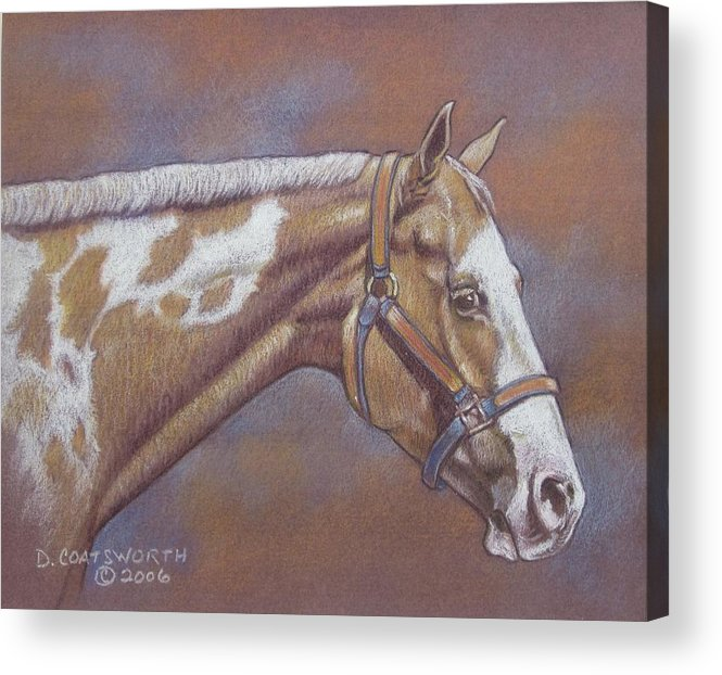 Acrylic Print featuring the painting Paint Horse by Dorothy Coatsworth