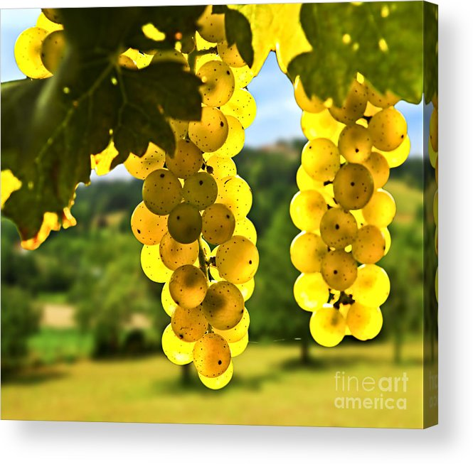 Green Acrylic Print featuring the photograph Yellow Grapes by Elena Elisseeva