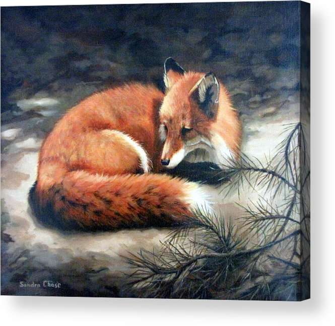 Red Fox Acrylic Print featuring the painting Naptime In The Pine Barrens by Sandra Chase