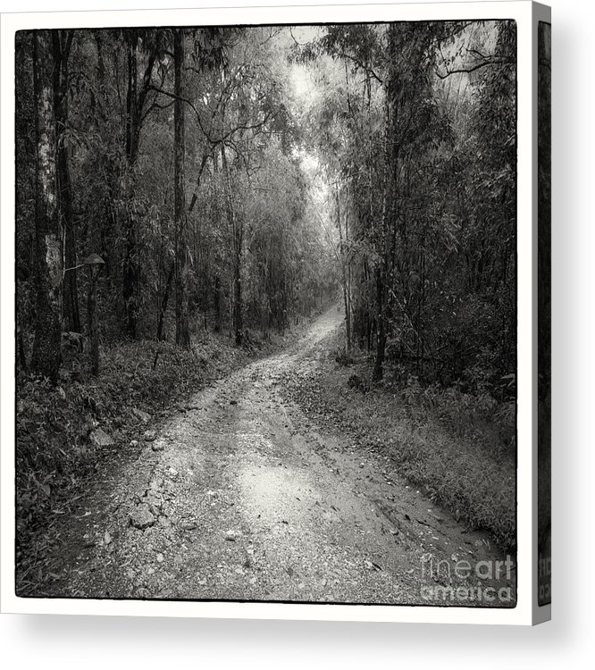 Adventure Acrylic Print featuring the photograph Road Way In Deep Forest by Setsiri Silapasuwanchai