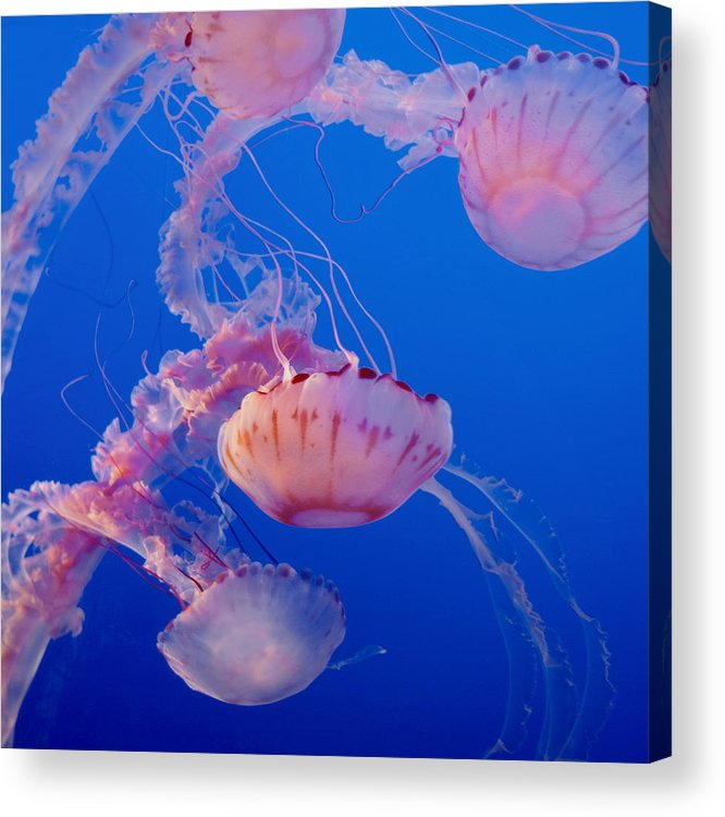 Submerge Acrylic Print featuring the photograph Below The Surface 3 by Jack Zulli