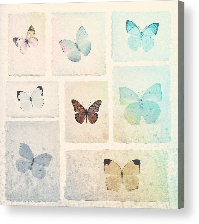 Butterflies Acrylic Print featuring the digital art Captured Beauty by David Ridley